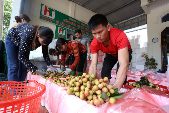 Northern Vietnam's lychee sees uptick in prices
