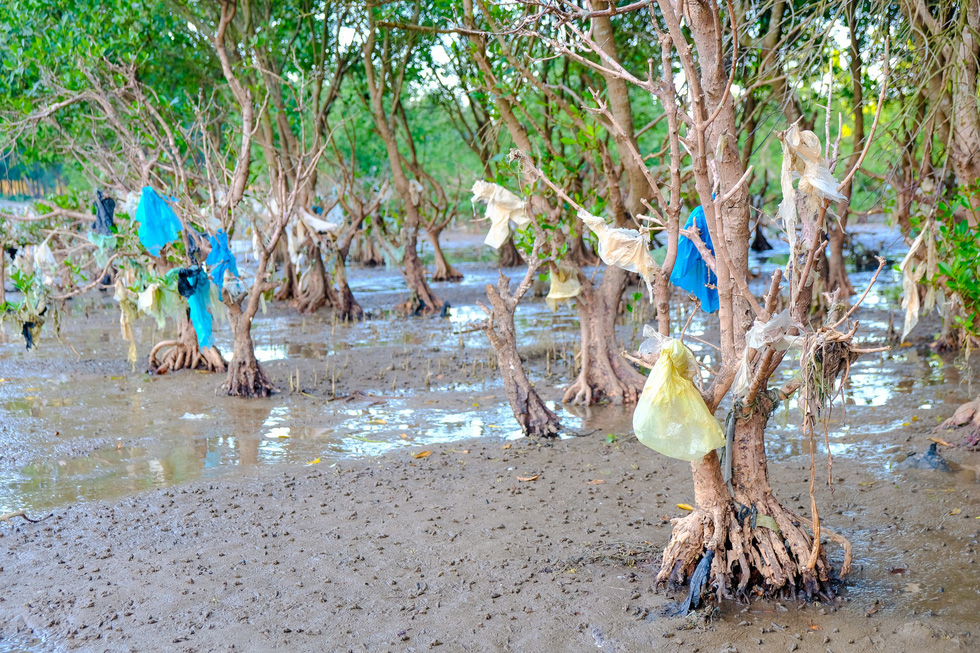 Plastic bags are stuck on trees at a coastal protection forest in north-central Thanh Hoa Province.