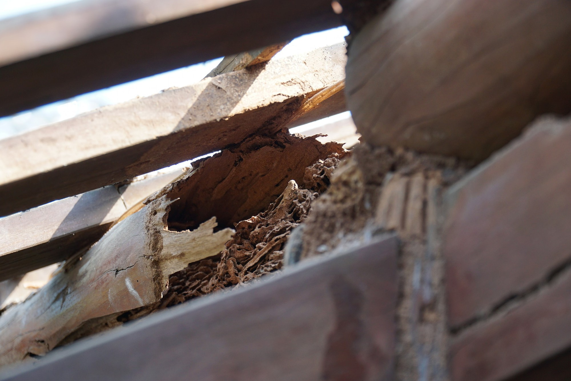 Wooden columns of the main structure of the Tu Hieu Pagoda in Hue, Vietnam are badly damaged by termites in this photo uploaded to the pagoda's official Facebook page.