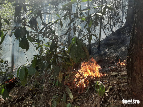 A forest fire burns in Ha Tinh, north-central Vietnam, June 29, 2019. Photo: Doan Hoa / Tuoi Tre