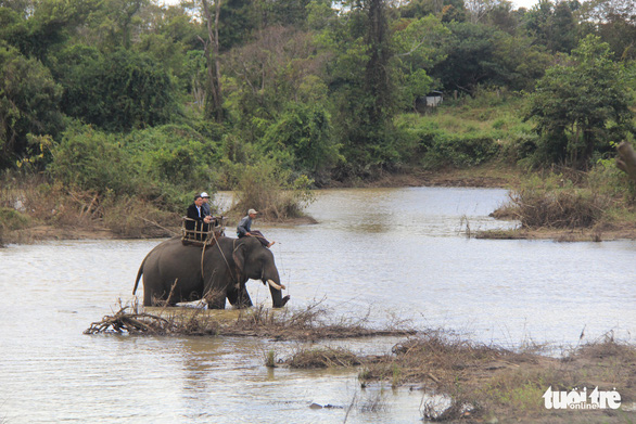 An elephant transports people in the Central Highlands Province of Dak Lak. Photo: Trung Tan / Tuoi Tre