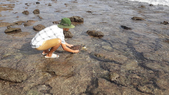 Hawksbill sea turtle trapped in plastic rescued on Vietnam's Con Dao Island
