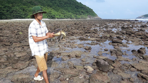 A park ranger releases the turtle back to the sea on Con Dao Island, southern Vietnam. Photo: Con Dao Park Ranger