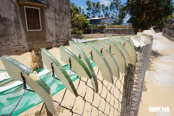 <em>Slices of giant winter melon are dried on a fence in Chanh Trach Village, My Tho Commune, Phu My District, Binh Dinh Province. Photo: </em>Ngoc Diep / Tuoi Tre