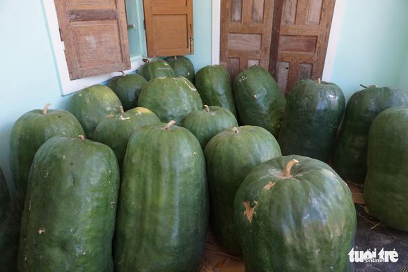 In Vietnam, farmers grow giant winter melons despite little profit