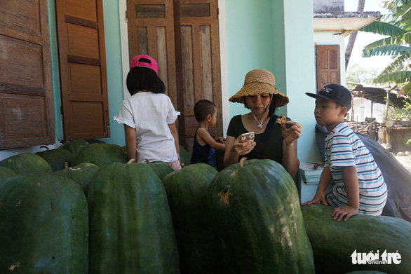 <em>A crop of giant winter melons is seen in Chanh Trach Village, My Tho Commune, Phu My District, Binh Dinh Province. Photo: </em>Ngoc Diep / Tuoi Tre