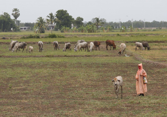 A dried out field in Thailand. Photo: Bangkok Post