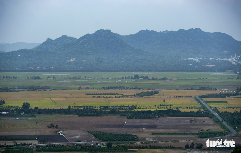 Endless paddy fields stretching to the Cam (Forbidden) Mountain in Tinh Bien District are seen from atop Sam Mountain. Photo: Tuoi Tre