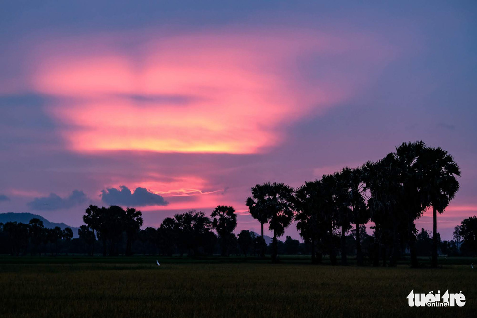 <em>The magnificent scene of sunset is captured in the paddy fields near the foot of Sam Mountain. Photo: </em>Tuoi Tre
