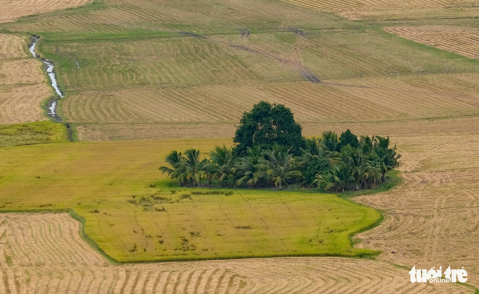 An oasis that emerges amid rice paddies is seen from atop Sam Mountain. Photo: Tuoi Tre