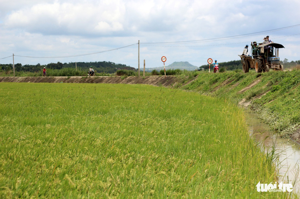 A section of a paddy field is saved from being inundated.