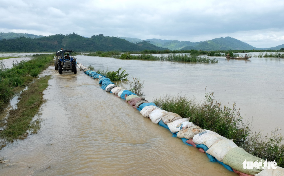 Water from the Me River flows into a paddy field in Quamg Dien Commune, Krong Ana District.