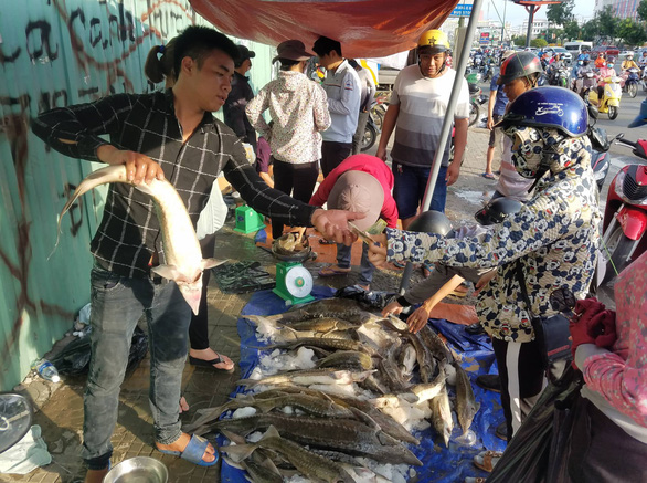 Sturgeon from flood-hit area on sale on Saigon sidewalks