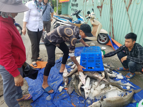 Customers buy sturgeon on a sidewalk on Truong Chinh Street in Tan Binh District, Ho Chi Minh City. Photo: Nguyen Tri / Tuoi Tre