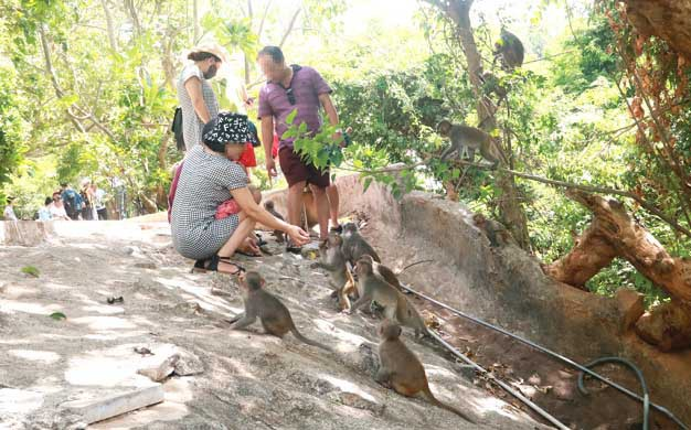 Wild monkeys in Vietnam's Son Tra Peninsula 'spoiled' by tourists who love feeding them
