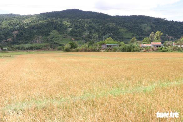 Vietnam's Central Highlands district struck by prolonged drought amidst rainy season