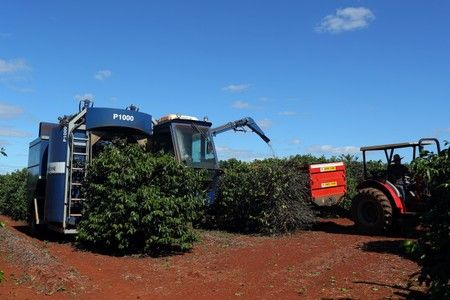 A harvesting machine harvests coffee in a plantation in the town of Sao Joao da Boa Vista. Photo: Reuters