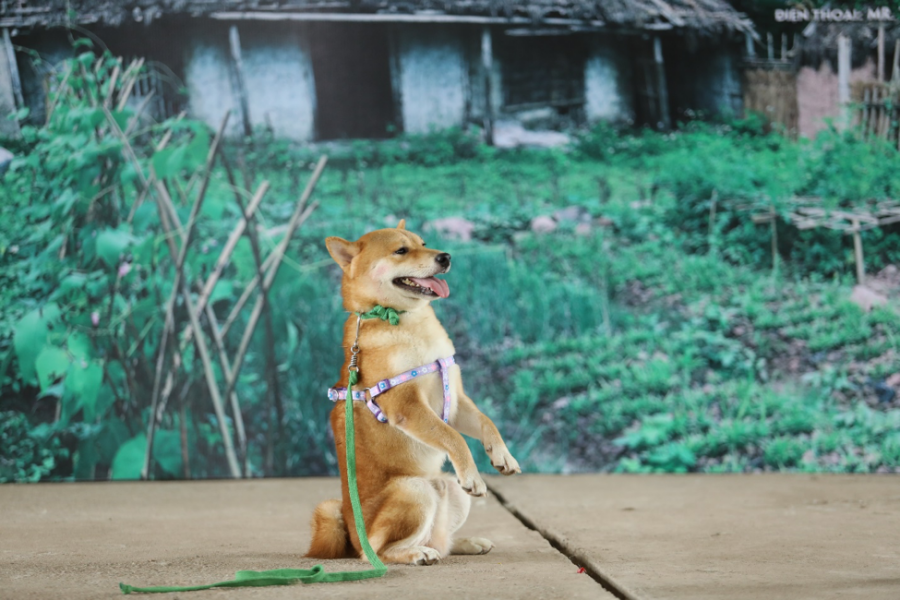 Film adapted from famous Vietnamese literary work bashed for casting Japanese dog for leading role