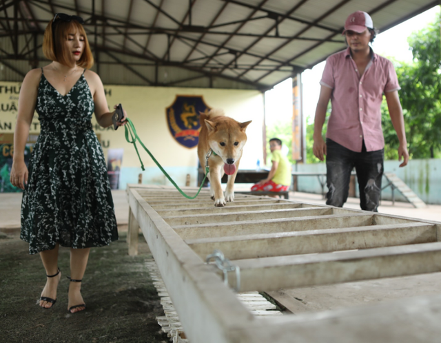 Director Tran Vu Thuy (R) watches a dog maneuvers through an obstacle course during an audition for the 'Cau Vang' film project in Hanoi, August 17-18, 2019. Photo: Luu Cuong