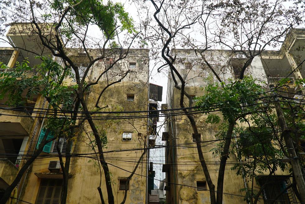 30-year-old trees allegedly poisoned in Hanoi neighborhood
