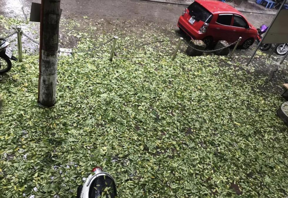 Fallen leaves fill the sidewalk.