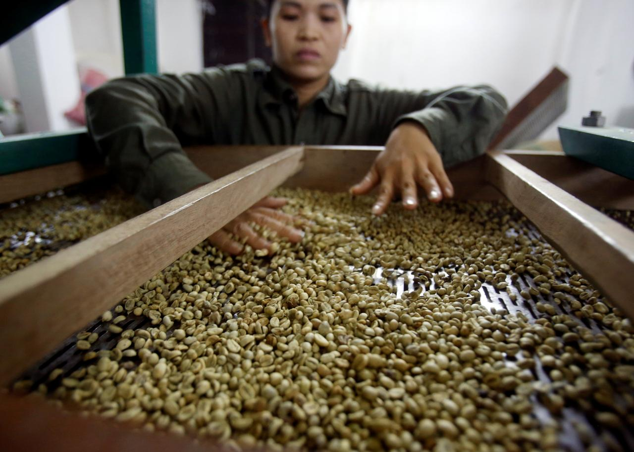 Vietnam Jan-Aug coffee exports likely fell 10.3% y/y: govt