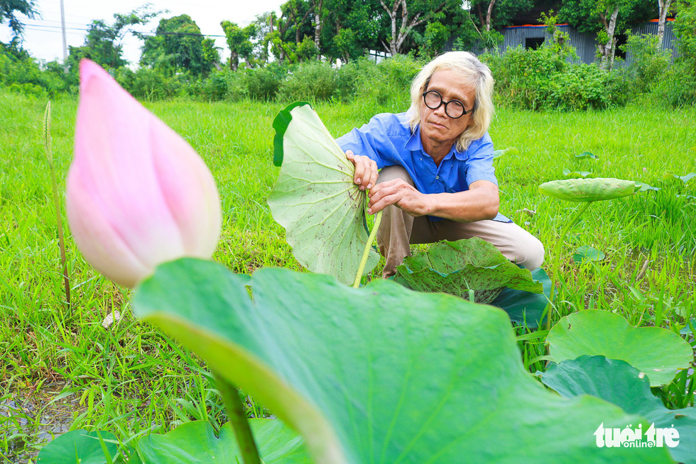 Le Van Nghia collects lotus leaves to make paintings in Dong Thap, southern Vietnam. Photo: Ngoc Phuong / Tuoi Tre