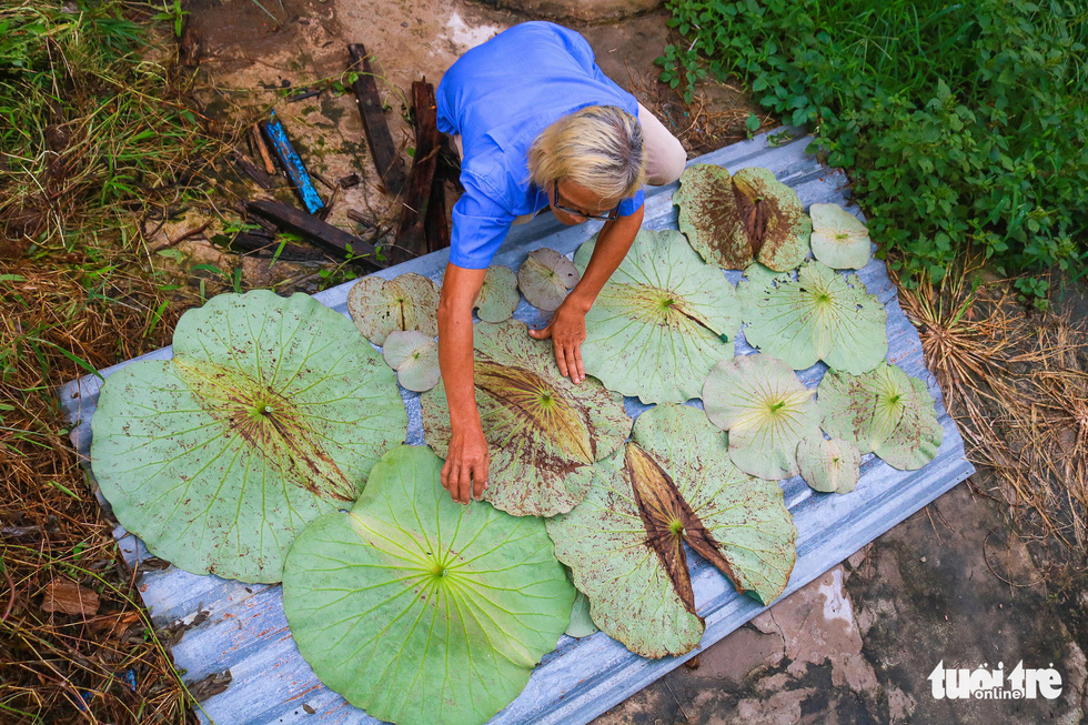 Vietnamese artist makes paintings from lotus leaves