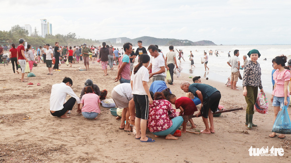 People collect shellfish washed ashore after storm at Cua Lo Beach in north-central province of Nghe An, August 30, 2019. Photo: Doan Hoa / Tuoi Tre