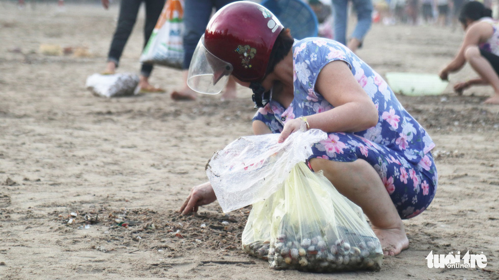 A woman collects shellfish washed ashore after storm at Cua Lo Beach in north-central province of Nghe An, August 30, 2019. Photo: Doan Hoa / Tuoi Tre
