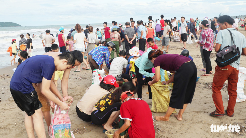 In Vietnam, hundreds flock to beach to collect shellfish washed ashore by storm