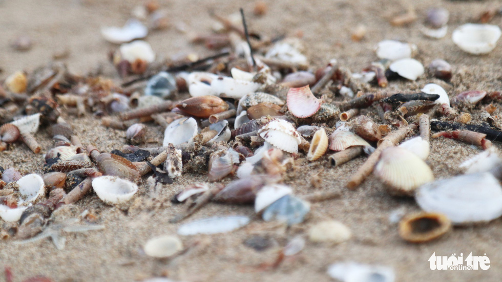 Dead shellfish washed ashore after storm are seen at Cua Lo Beach in north-central province of Nghe An, August 30, 2019. Photo: Doan Hoa / Tuoi Tre