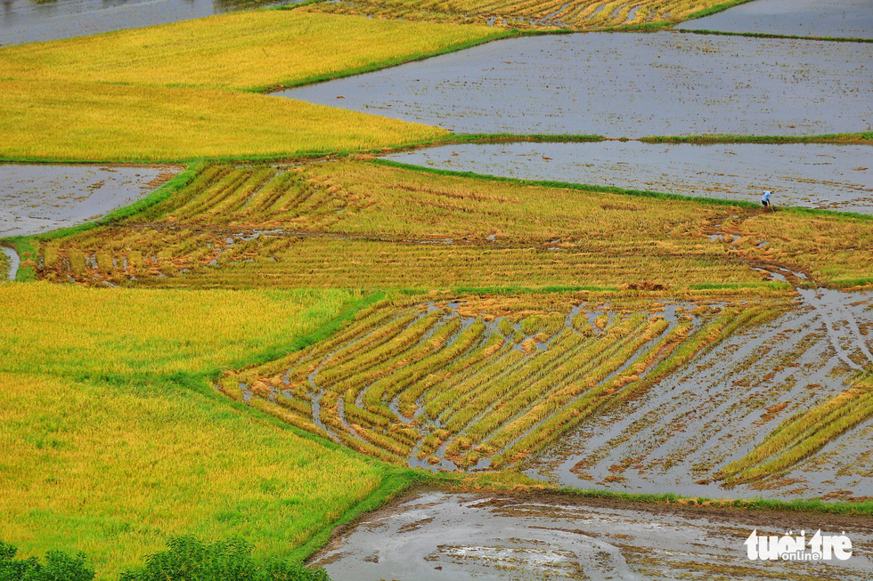 Vast rice paddies are seen in Tri Ton District in An Giang Province, southern Vietnam. Photo: Nguyet Nhi / Tuoi Tre
