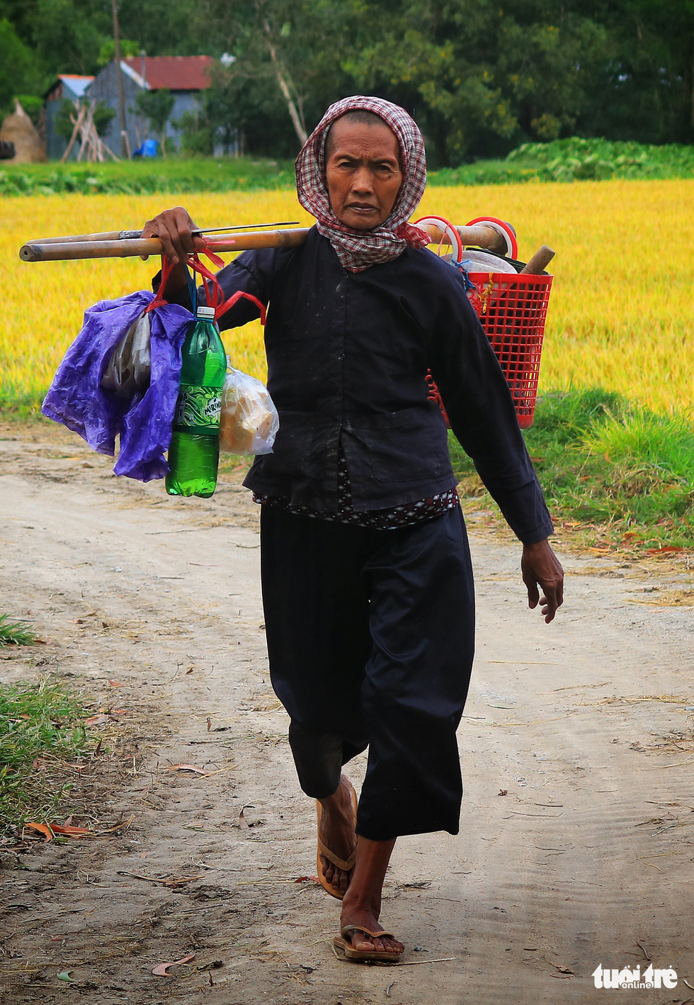 A woman is seen on her way to work on rice paddies in Tri Ton District, An Giang Province, southern Vietnam. Photo: Nguyet Nhi / Tuoi Tre