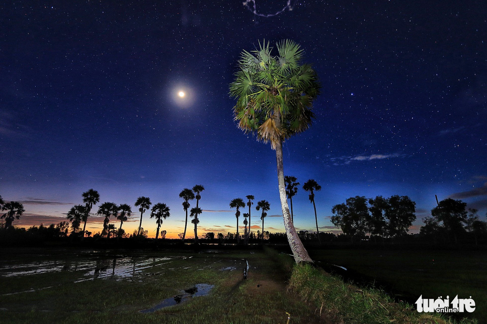 Moon shines above palm trees in a paddy field in Tri Ton District, the Mekong Delta province of An Giang. Photo: Nguyet Nhi / Tuoi Tre