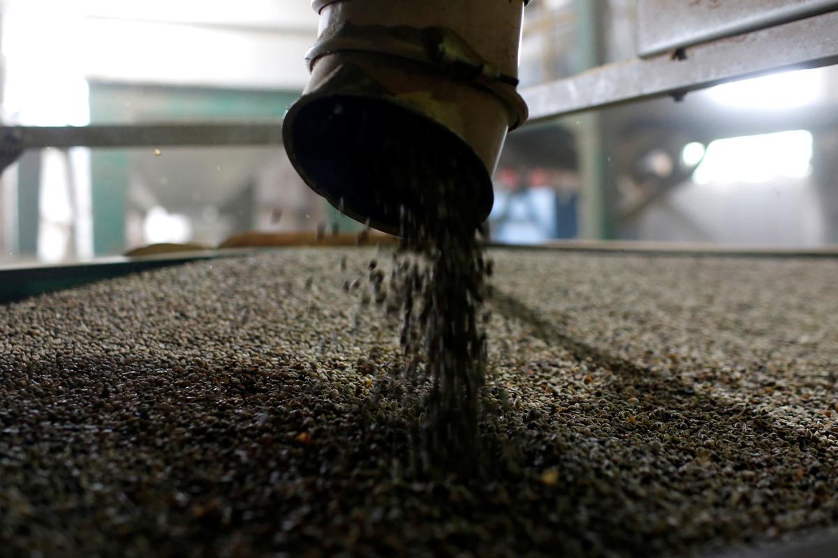 Vietnam coffee prices unchanged; Indonesian premium widens