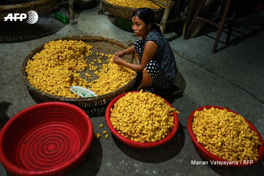 A woman processes cocoons at the Co Chat village in Vietnam. Photo: AFP