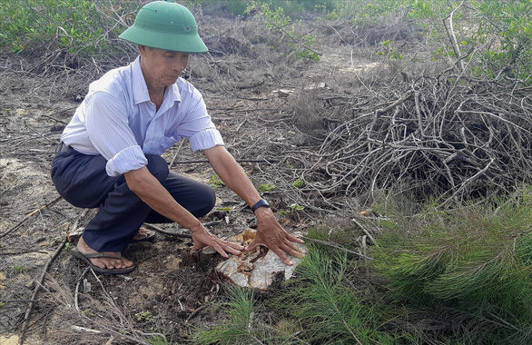 140 hectares of once protection forest wiped out in south-central Vietnam
