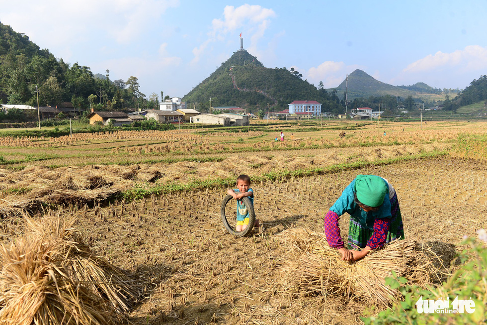 A woman collects straw after the harvest while her son plays nearby in a field in Lung Cu Commune, Dong Van District, Ha Giang Province, Vietnam. Photo: Quang Dinh / Tuoi Tre