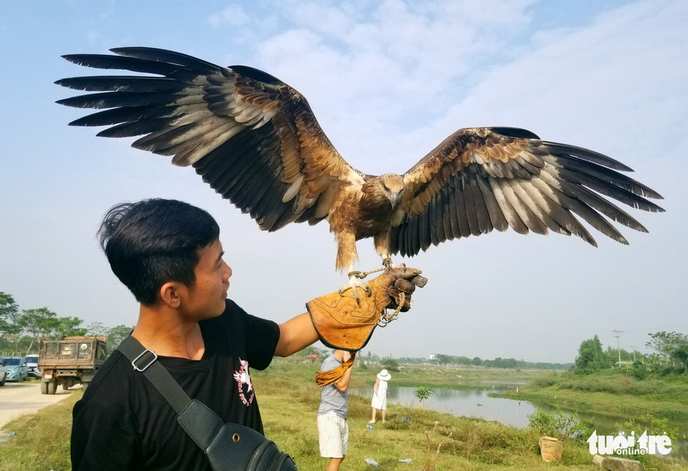 Birds of prey amuse audience at annual contest in Hanoi