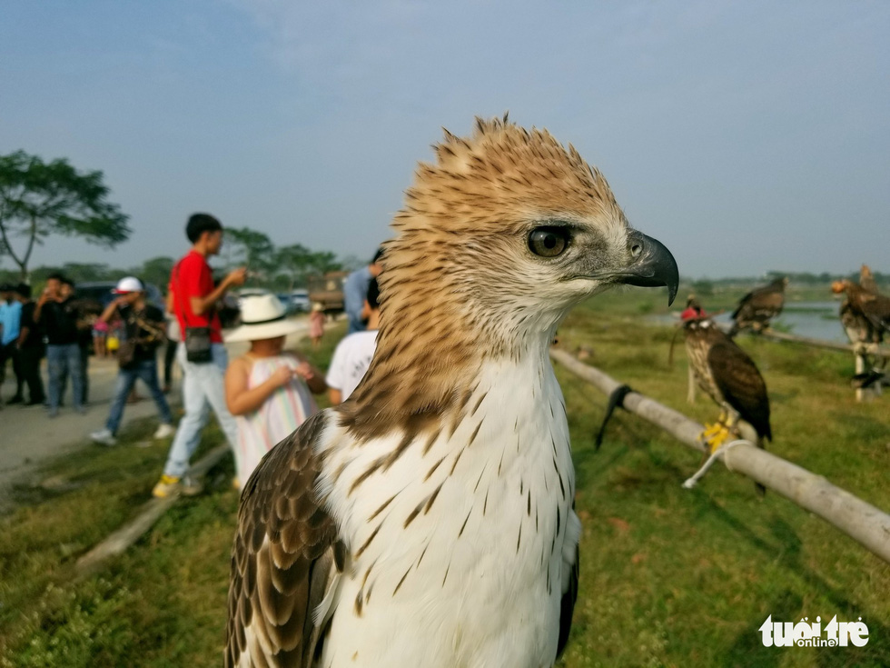 A raptor is seen at the 5th Northern Vietnam Birds of Prey Contest in Hanoi, October 27, 2019. Photo: Ha Thanh / Tuoi Tre