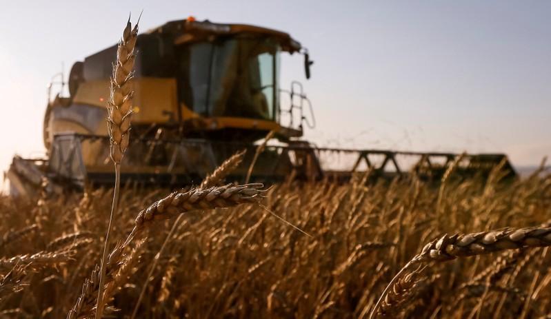 Russia resumes wheat export to Vietnam: TASS