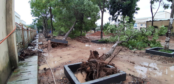 Uprooted trees in Tam Ky City, Quang Nam Province. Photo: Le Trung / Tuoi Tre