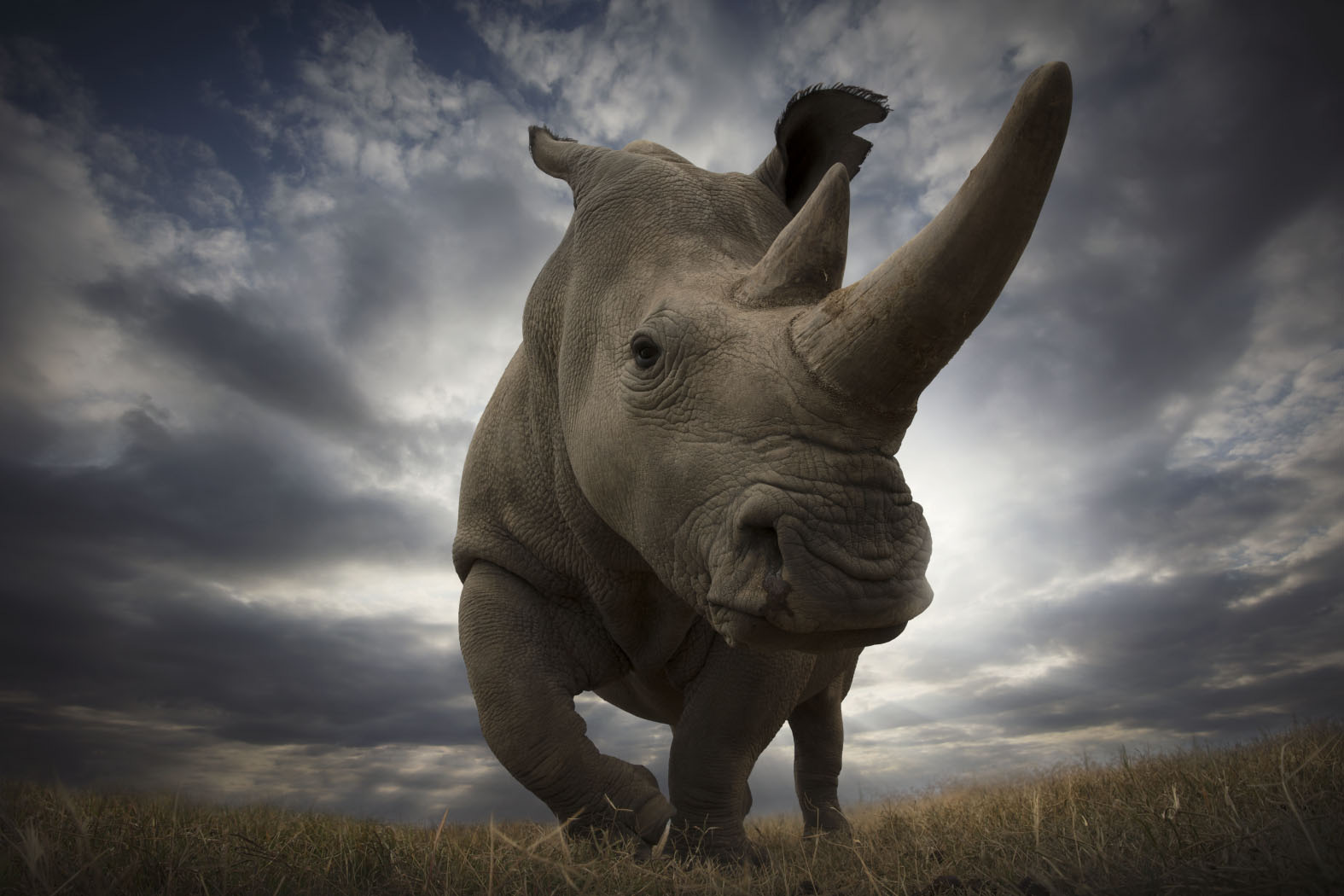 A rhino in Africa. Photo: Bjorn Persson