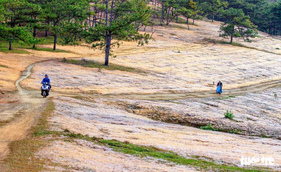 Pink grassland in the Dan Kia Lake – Golden Stream area, Lac Duong District, the Central Highlands province of Lam Dong. Photo: Dinh Van Bien / Tuoi Tre