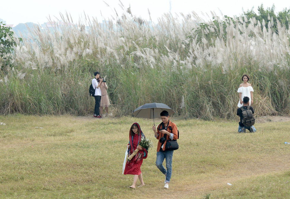 Couples take photos against bushes of reeds in Hanoi. Photo: T.T.D. / Tuoi Tre