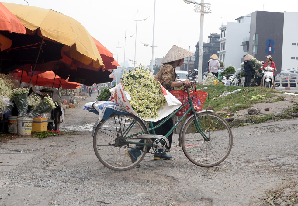 A woman carries daisies  on her bike in Hanoi. Photo: T.T.D. / Tuoi Tre