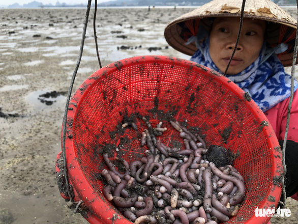 Vietnamese fisherwomen rake in big bucks with local sea worms