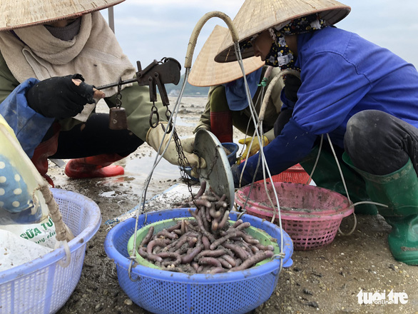 Women catch sa sung on the Chuong Xa tidal flat in Van Don District, Quang Ninh Province, Vietnam. Photo: Quang The / Tuoi Tre