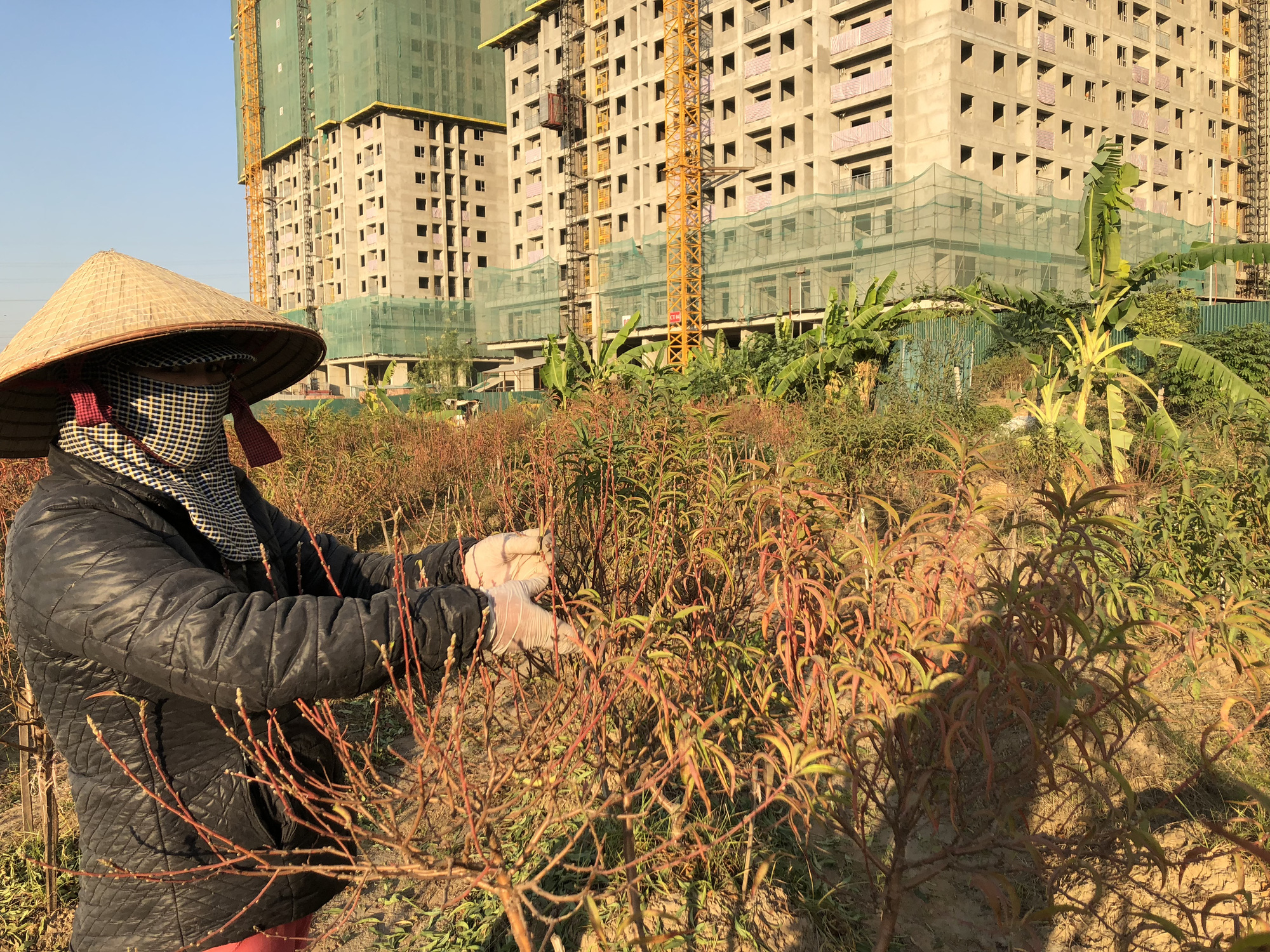 A woman tries to save the few trees that are still alive. Photo: Quang The / Tuoi Tre